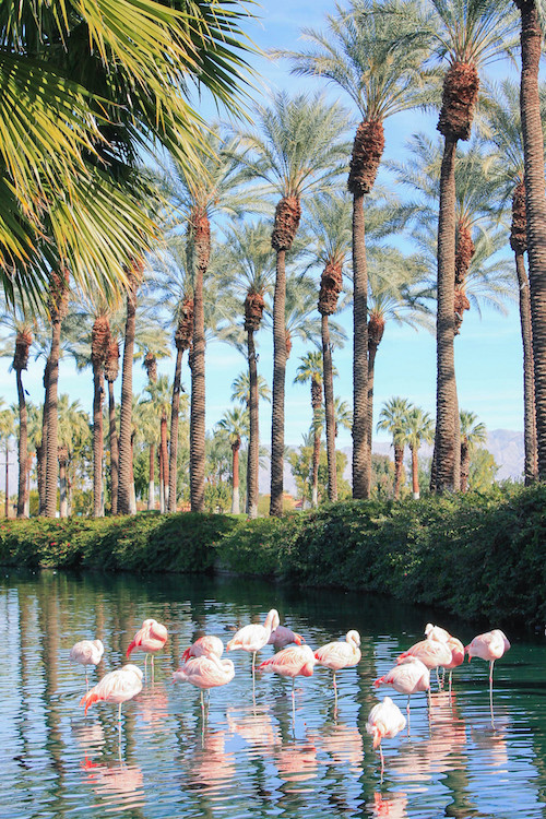 design darling palm springs flamingos jw marriott palm desert