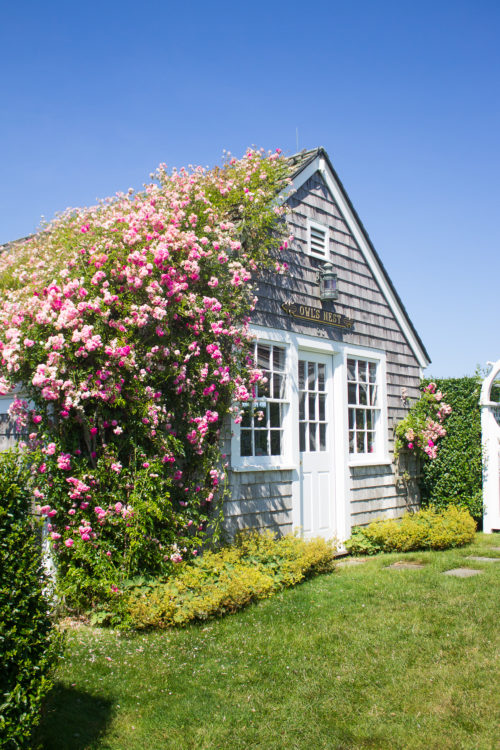 rose covered cottage in sconset featured on design darling nantucket travel guide