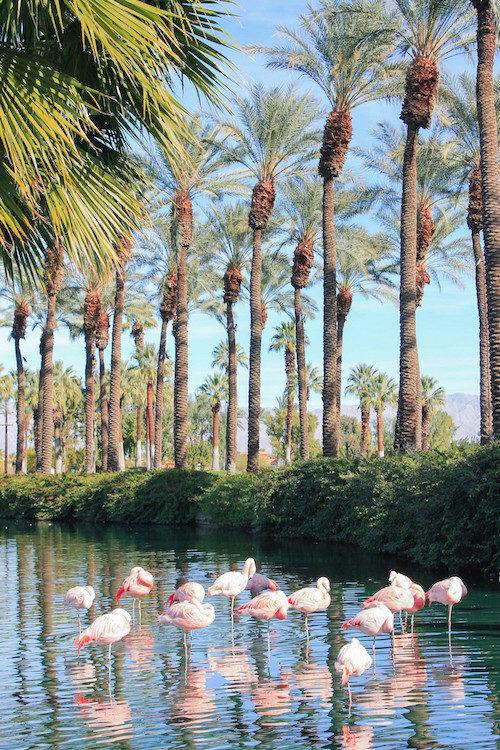 design-darling-palm-springs-flamingos-jw-marriott-palm-desert-500x750