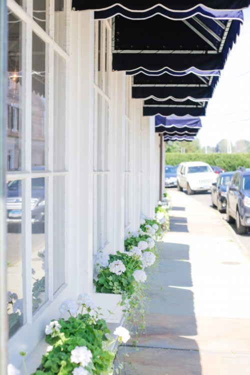 geranium window boxes in southport ct on design darling