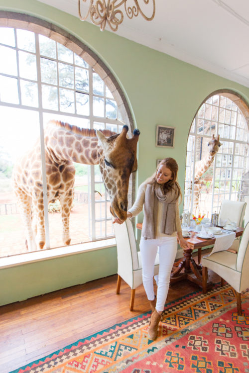 feeding giraffes at giraffe manor kenya