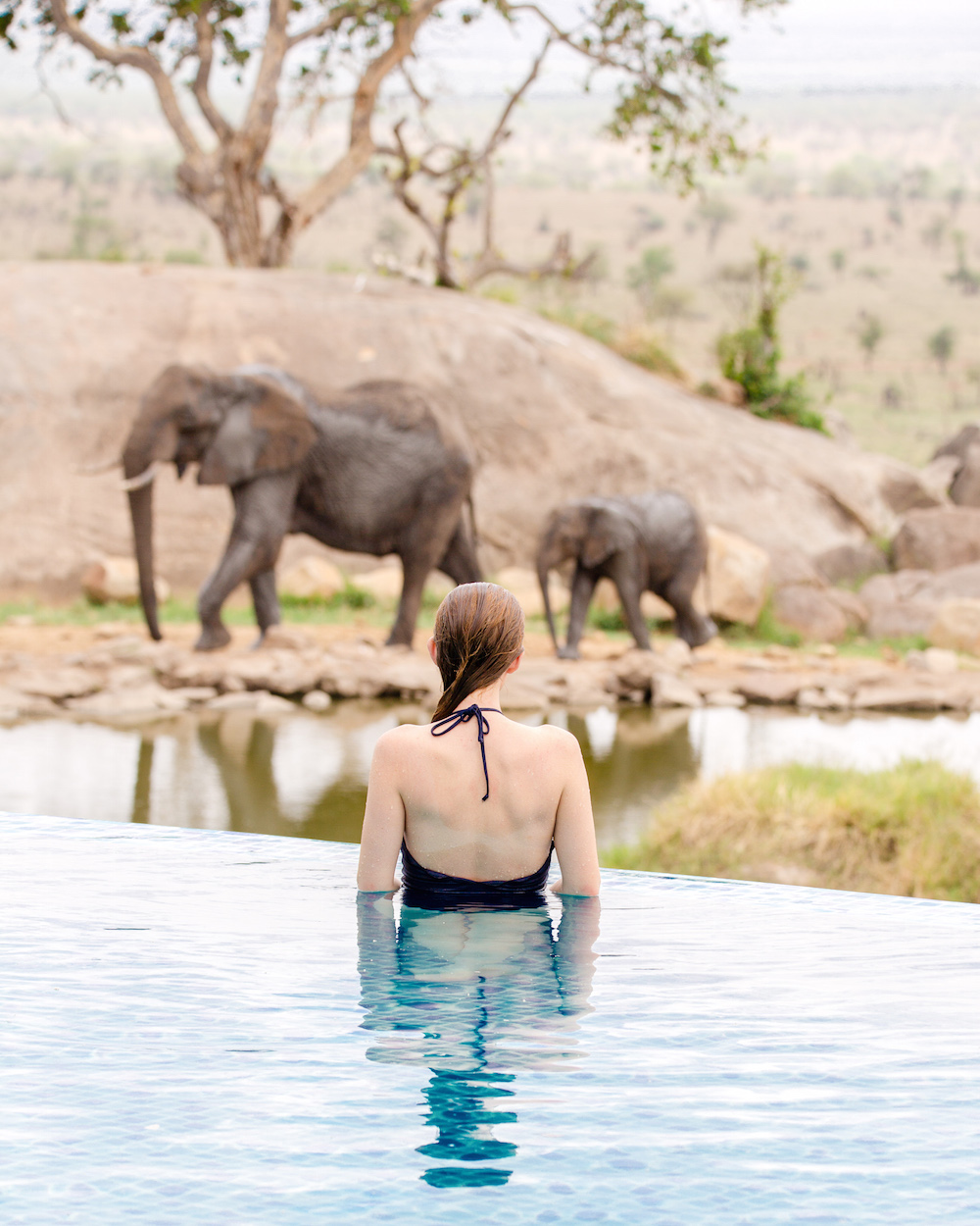 four seasons serengeti pool on design darling