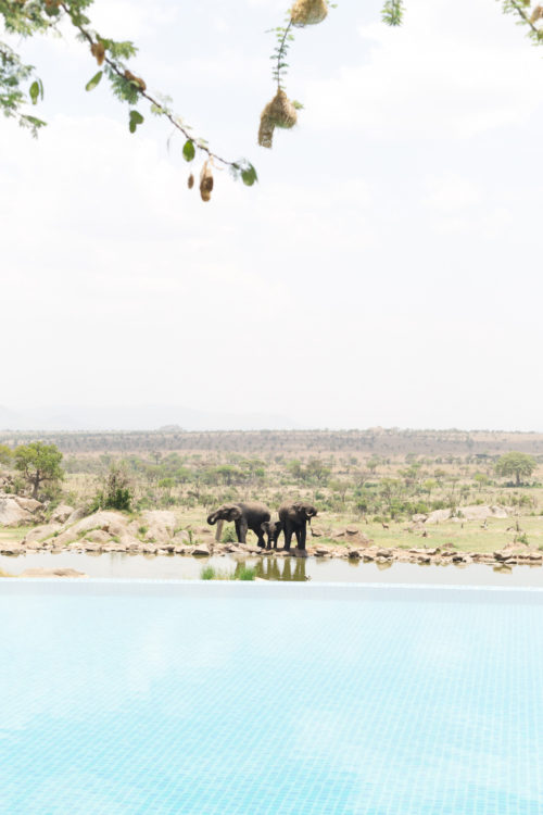 four seasons serengeti pool with elephants