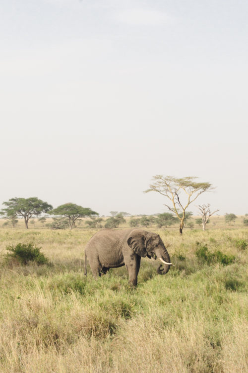 four seasons serengeti review