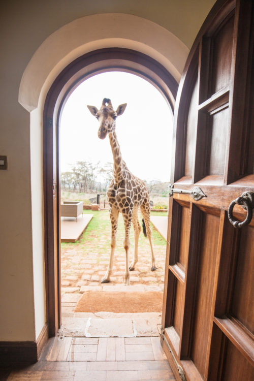 giraffe manor honeymoon review