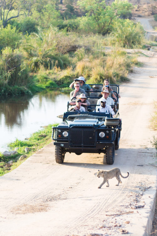 londolozi land rover tracking leopard cub