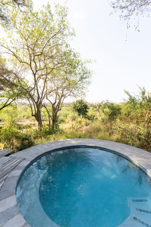 londolozi tree camp on design darling