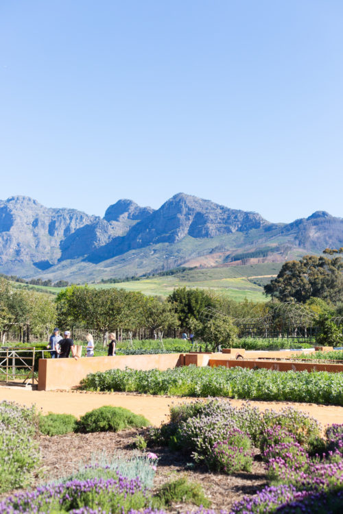 winelands south africa