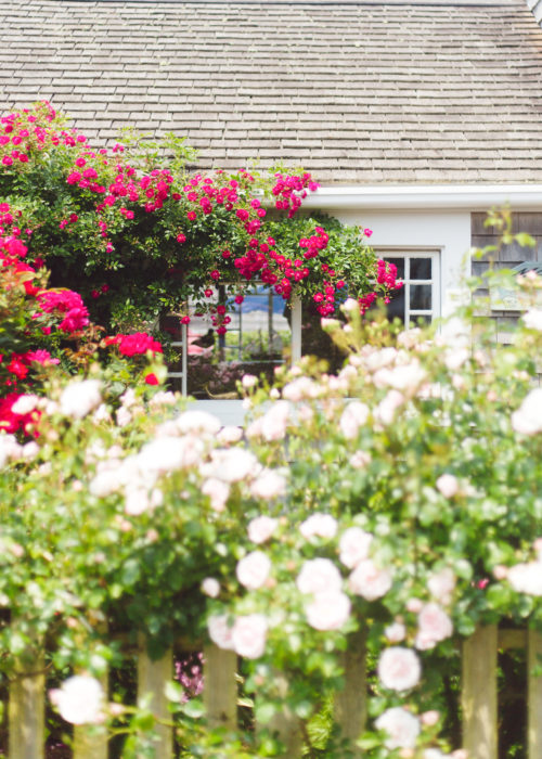 rose covered cottage nantucket