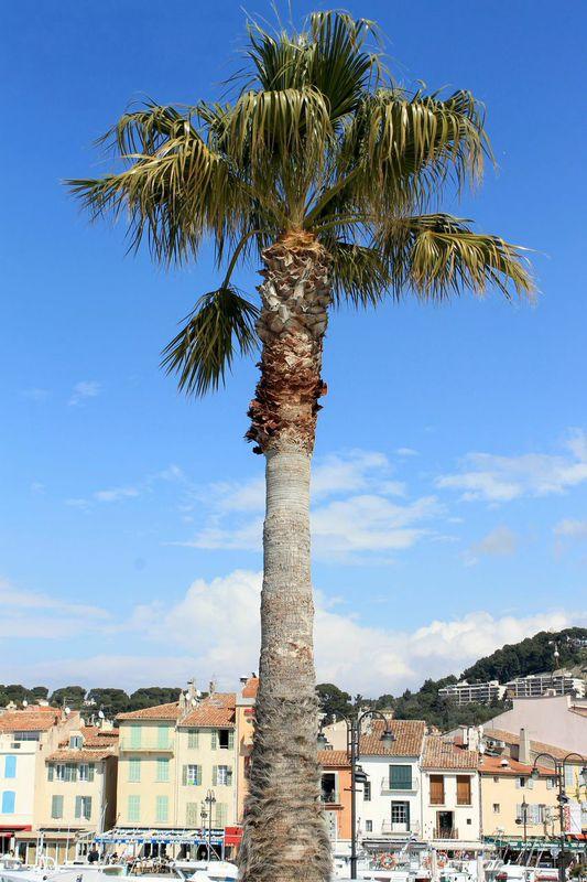 cassis france port
