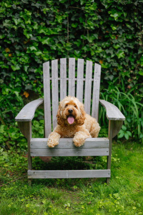 design darling rory in adirondack chair
