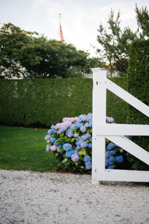 sconset hydrangeas nantucket