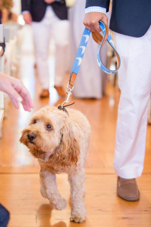 design darling wedding dog ring bearer nantucket leash