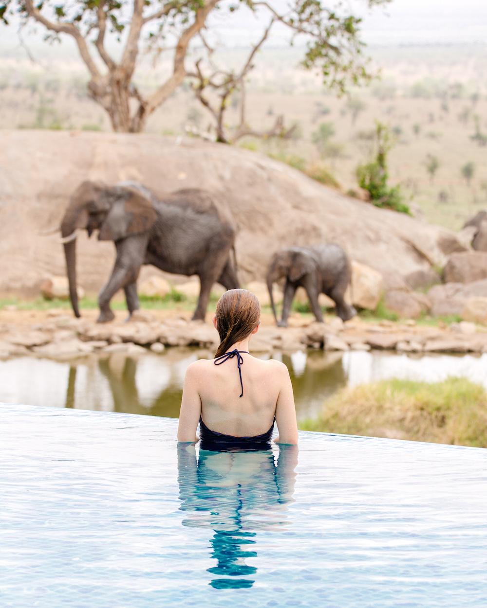 four seasons serengeti pool on design darling