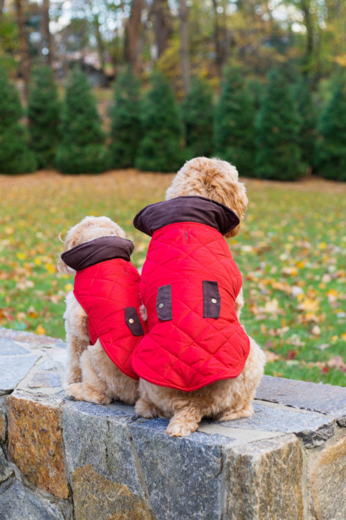 design darling red dog jackets