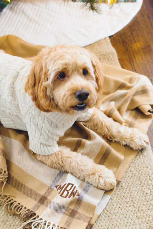 mark & graham cable knit dog sweater and border plaid throw blanket
