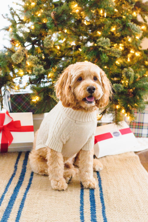mark & graham cable knit dog sweater on design darling