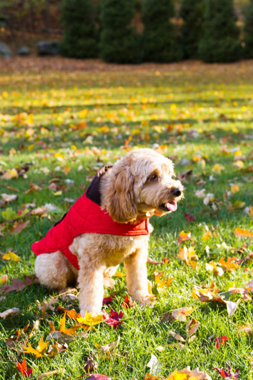 red quilted dog jacket