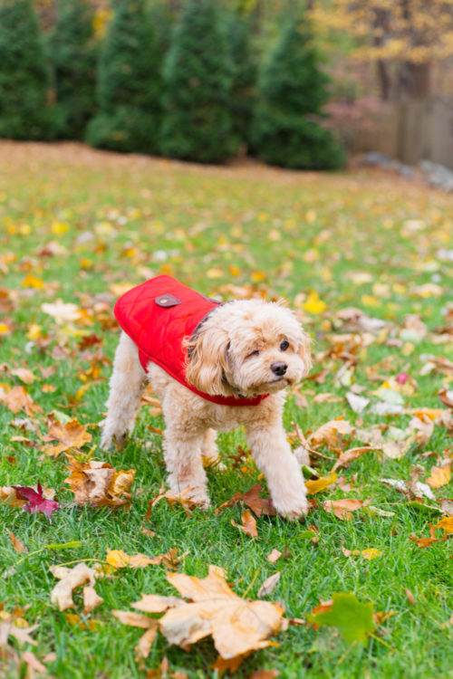 red quilted dog jacket on design darling