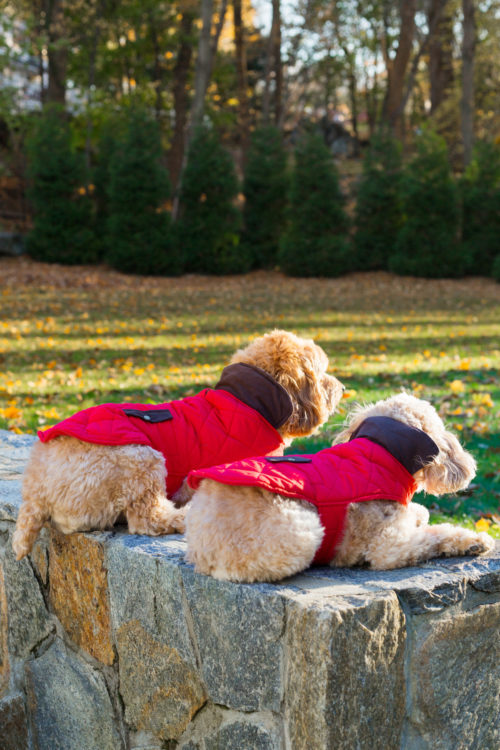 red quilted dog jackets