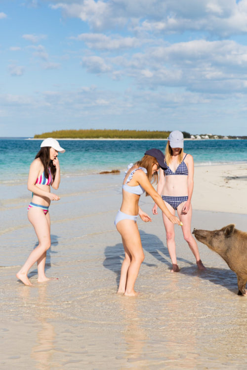 swimming-pigs-of-abaco-on-design-darling-768x1152