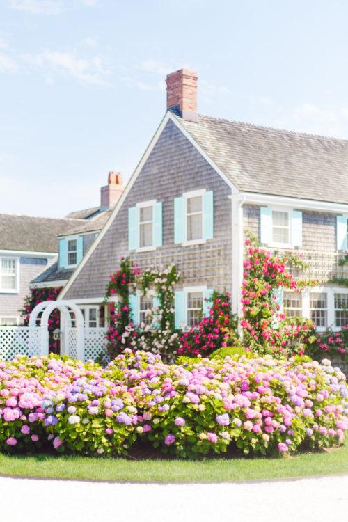 Nantucket Print Shop Climbing Roses and Hydrangeas