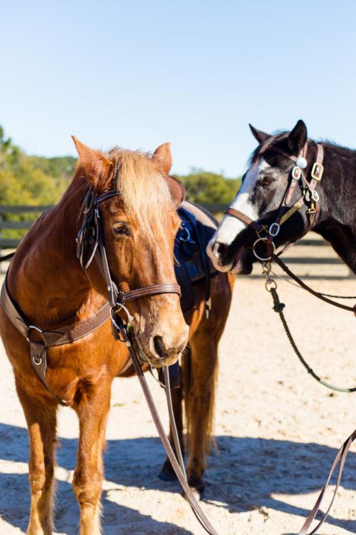 horseback riding at montage palmetto bluff
