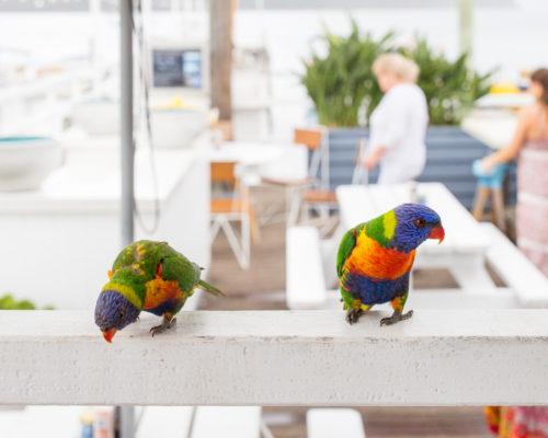 birds at boathouse palm beach sydney