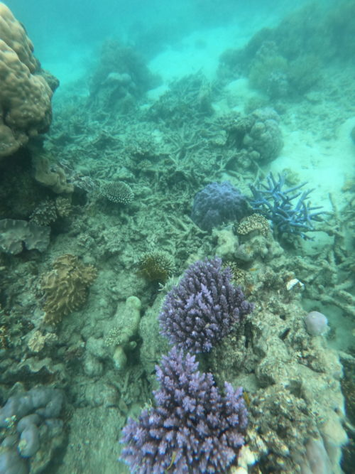 sailaway-great-barrier-reef-snorkeling-coral