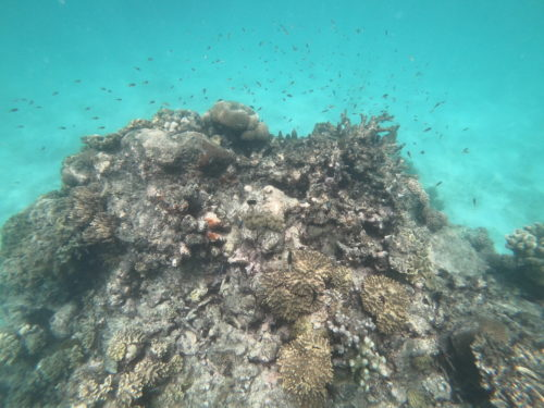 sailaway-great-barrier-reef-snorkeling-fis
