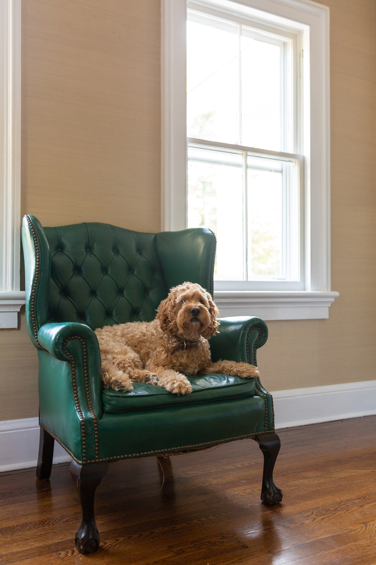 Design Darling Library Progress Wingback Chair Design Darling