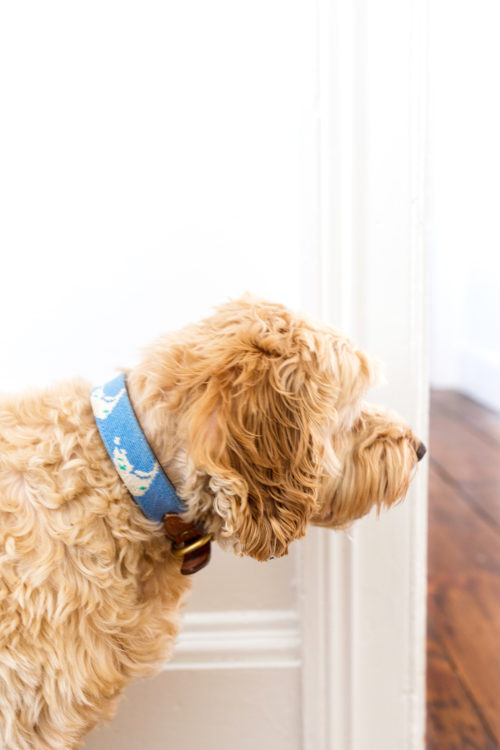 nantucket needlepoint dog collar design darling