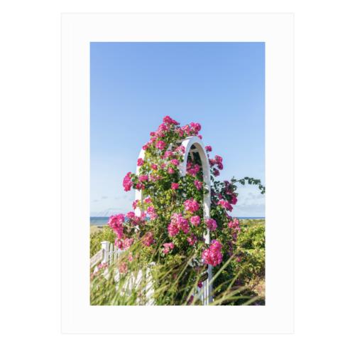 Pink Rose Arbor Framed print