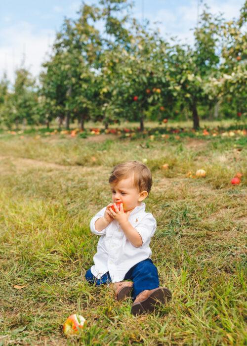 apple picking lyman orchards 8