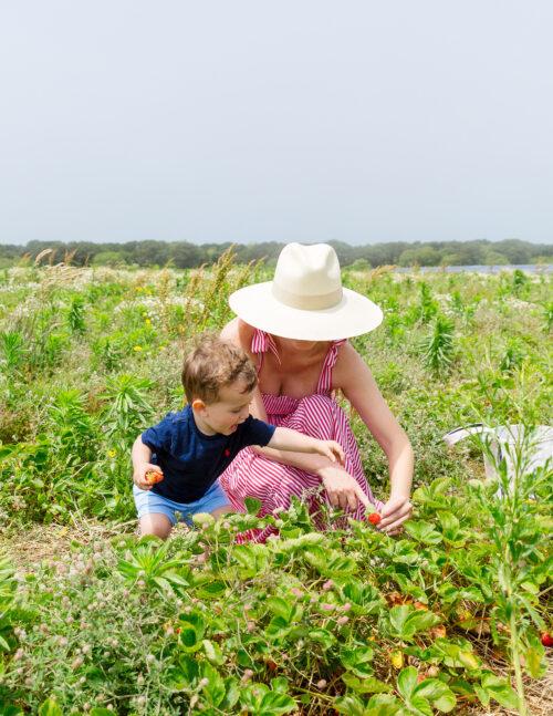 bartlett's farm strawberry picking maxwell & geraldine brooke dress in red
