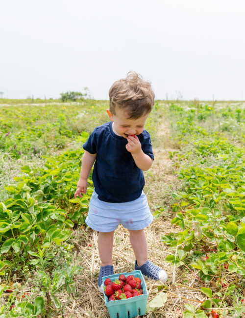 bartlett's farm strawberry picking with kids